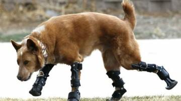 Crean en UVM prótesis articulada en 3D para perro