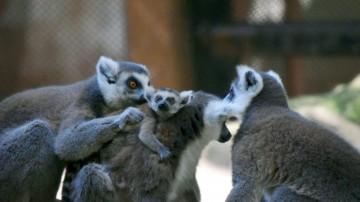 Ya fueron elegidos 3 nombres para los nuevos inquilinos del Zoológico de Chapultepec