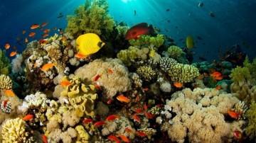 Investigadora de ICMyL desarrolla proyecto para proteger corales en arrecifes
