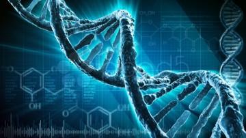 El núcleo celular, es la clave para contener el cáncer