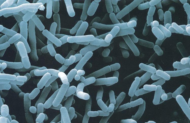 cien-bacteria1