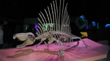 Inauguran en Puebla el Museo de la Evolución