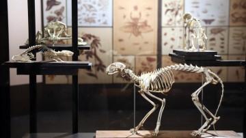 """Darwin, la exposición; """"Explorando las especies"""""""