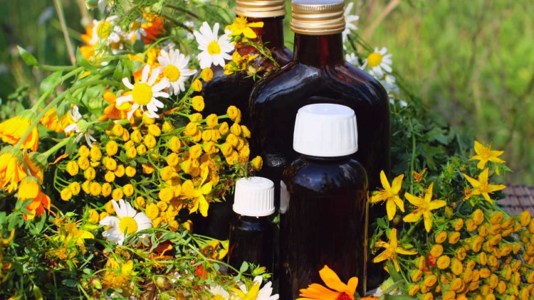 UAZ investiga nuevo tratamiento para el cáncer con plantas medicinales