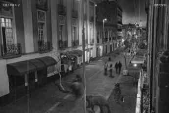 Oso pardo suelto en las calles de la CDMX